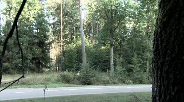 Oceniają stan drzew... z samochodu. Gdy spadło na auto, nie ma winnych