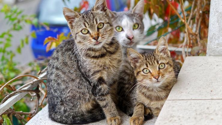 Policja zabroniła mu wyjść z domu po karmę dla kotów. Złożył pozew do sądu