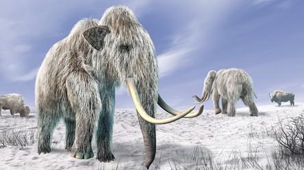 Na Syberii powstaje pierwszy na świecie park mamutów i innych wymarłych zwierząt